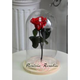 Trandafir stabilizat in cupola sticla H27cm