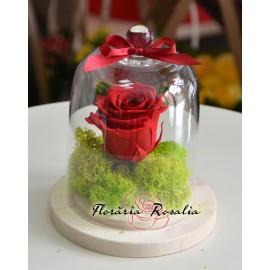 Trandafir stabilizat in cupola sticla H15cm