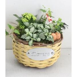 Cosulet de Paste cu plante