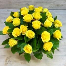 Cos 25 trandafiri galbeni